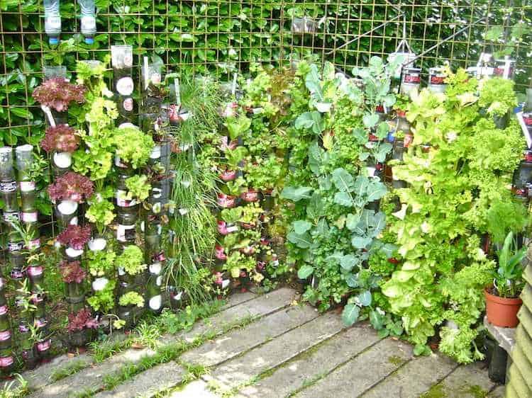 縦型野菜園