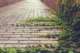 ivy climbing on bricks